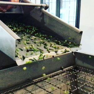 produzione-olio-oliva